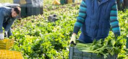 How to Help Fight Food Waste