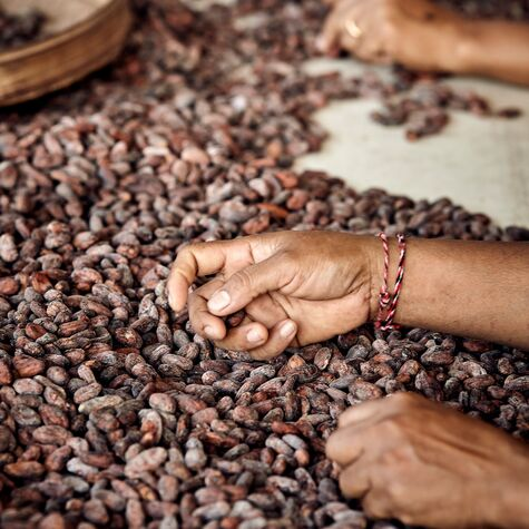 valrhona.us-our-expertise-selecting-and-growing-cocoa