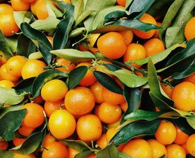 Valrhona.com-trends-book-all-about-orange