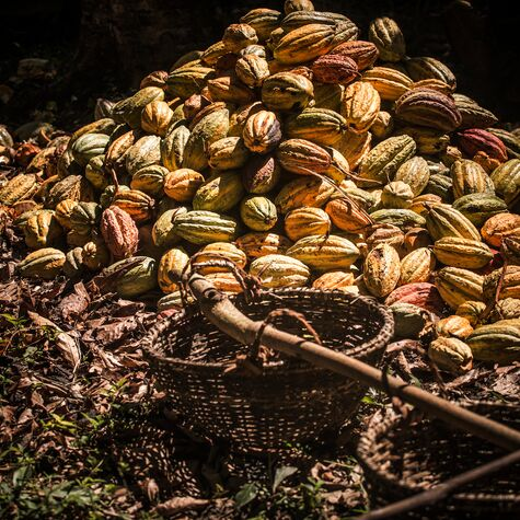 Plantation Millot Madagascar