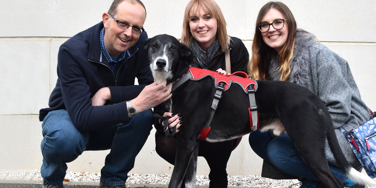 Image for carrousel #pogdogs Bud has finally found a home