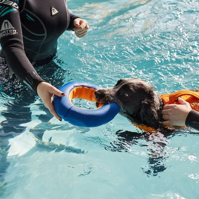 Hydrotherapy at Battersea