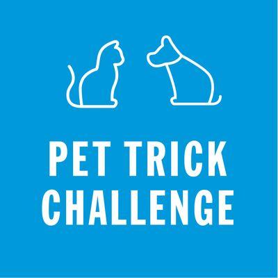 Pet trick challenge