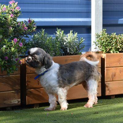 Sensory gardens for dogs