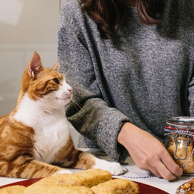 Toxic foods and items that cats can't eat