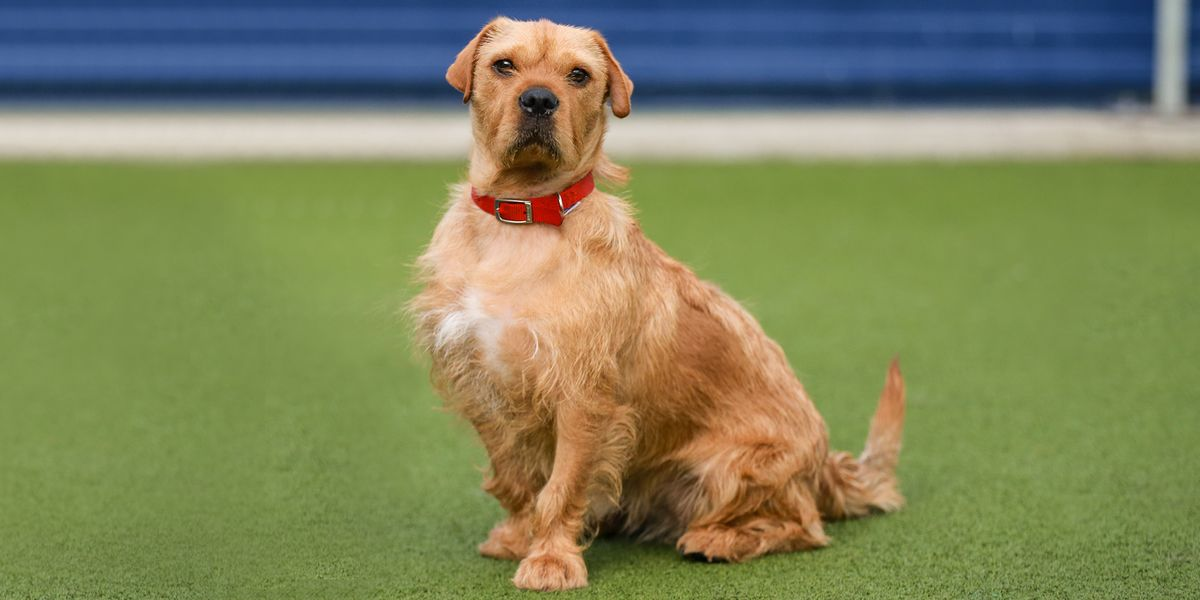 dogs battersea dogs amp cats home