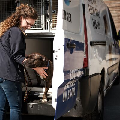How has COVID-19 affected the animal rescue sector?