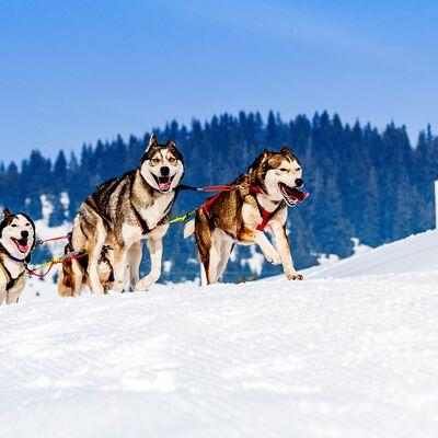 The Lapland Husky Trail