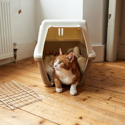 Cat carrier advice