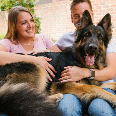 Big dogs: a lapful, not a handful