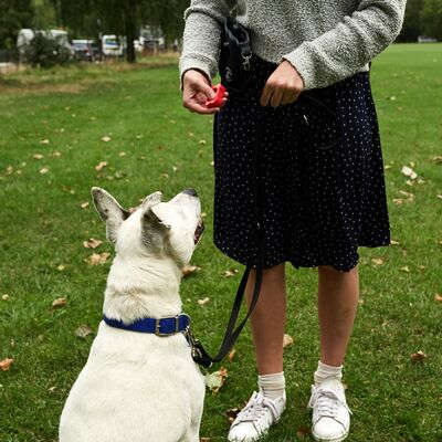 How to Find a Qualified Dog Trainer or Behaviourist