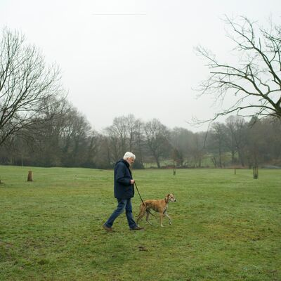 How to find a dog walker, day care or dog sitter