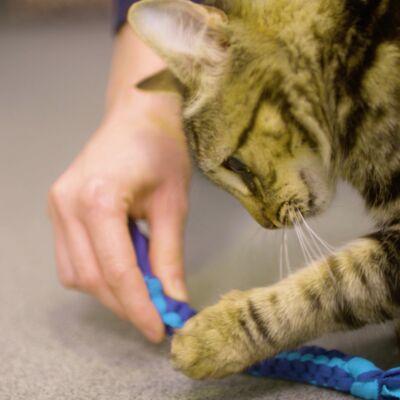 DIY Cat Toys