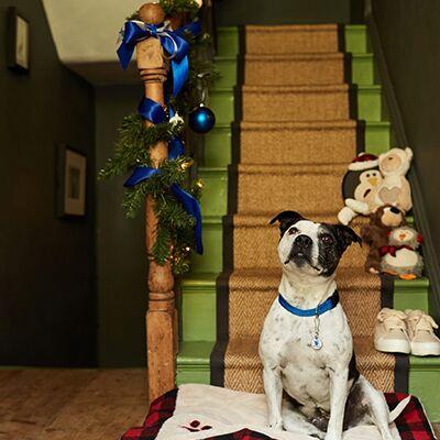 Battersea's Online Christmas Auction