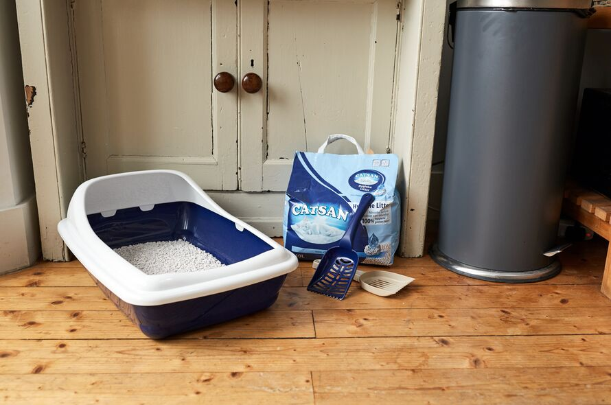 Cat Litter Tray Advice | Battersea Dogs & Cats Home
