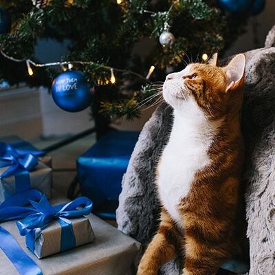 Homemade Christmas Stocking Fillers for Your Pet