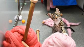 Knitting Kittens notonthehighstreet.com special