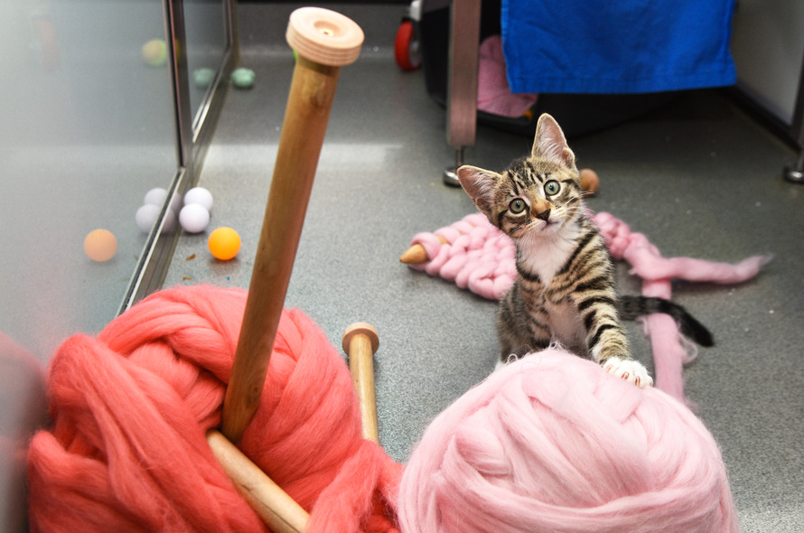Knitting Events London : Knitting kittens club battersea dogs cats home