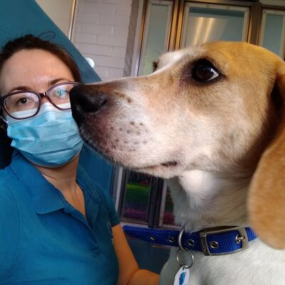 Getting dogs used to people in face masks