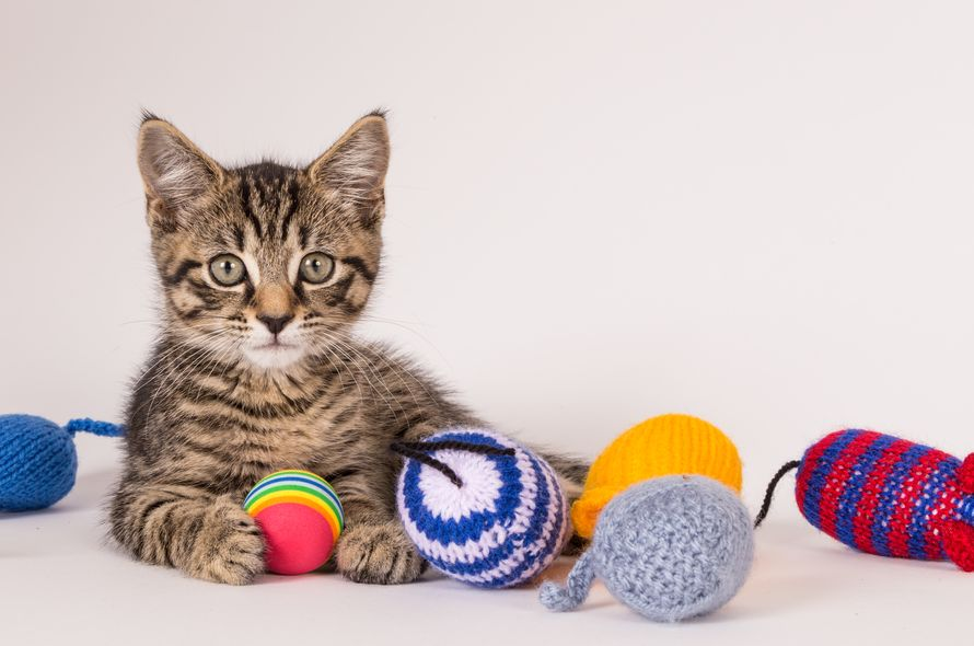 Knitting Kittens Battersea : Knitting kittens club battersea dogs cats home