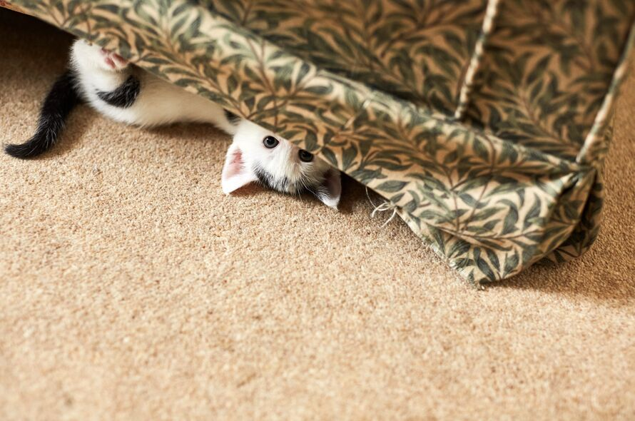 What To Know When Buying A Kitten Battersea Dogs Cats Home