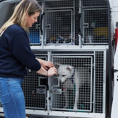 Why Animal Welfare is at Risk when Pets are Imported