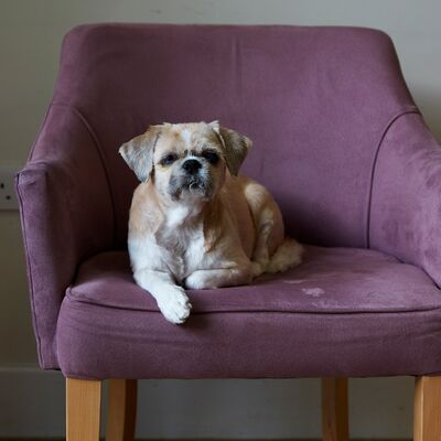 Pet Friendly Properties – share your experiences