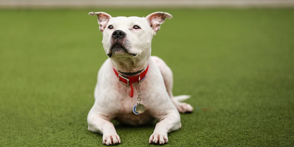 Image for carrousel Register to rehome a Battersea dog