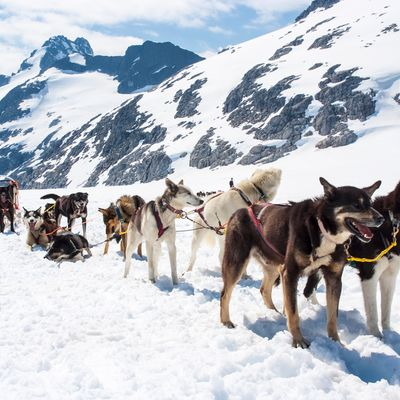 The Lapland Husky Trail