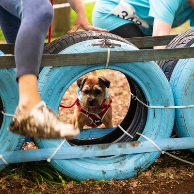Muddy Dog Challenge press pack
