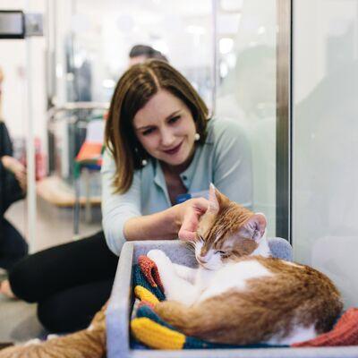Sponsor a cat cabin
