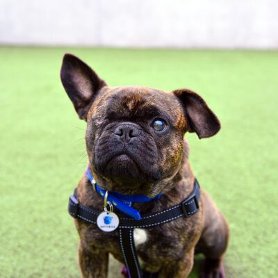 Blind dog care and training
