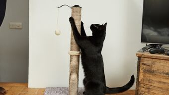 Indoor things to stimulate your cat's senses