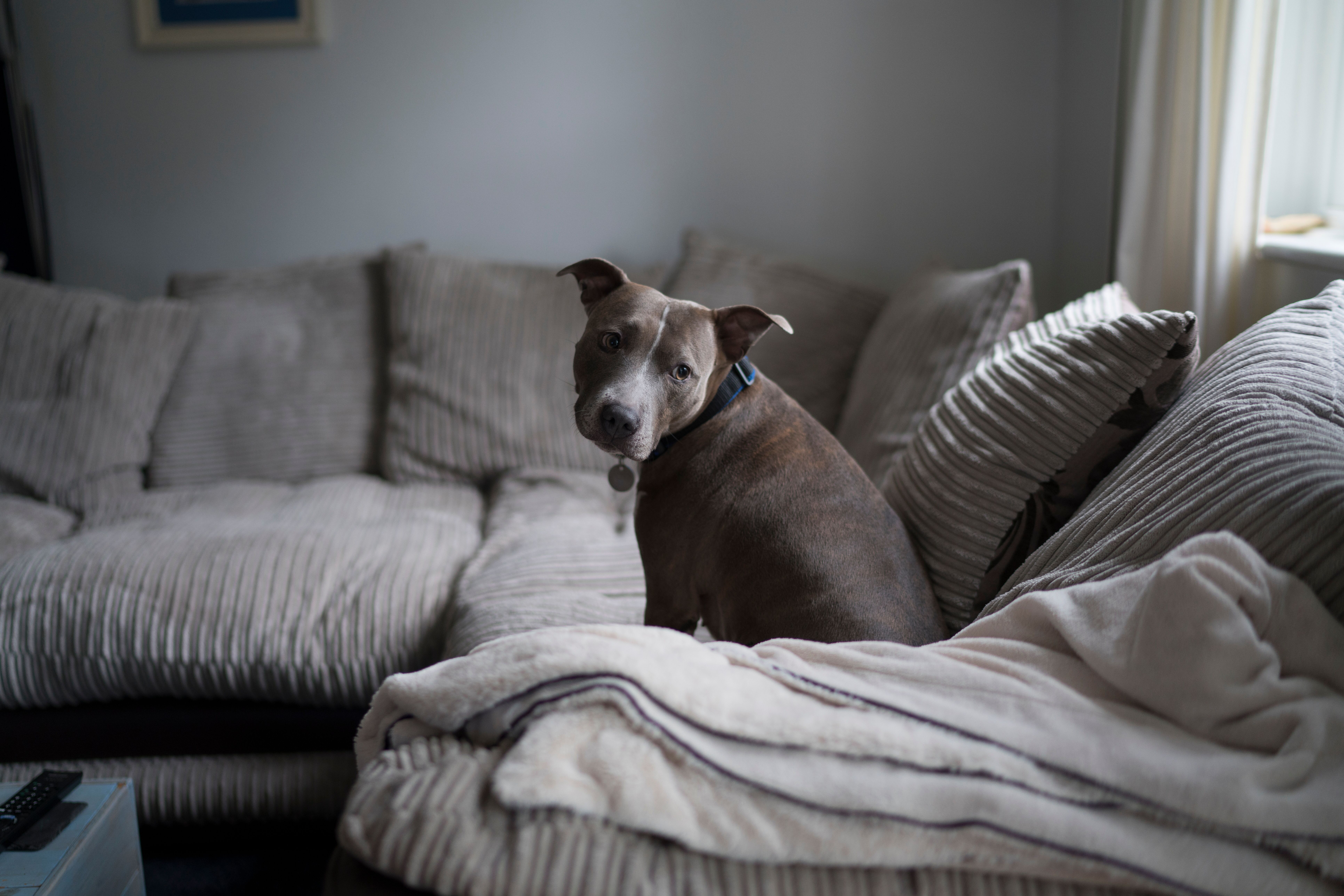 STAFFIES. THEY'RE SOFTER THAN YOU THINK.
