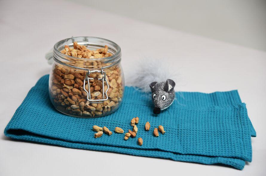 Image of Homemade DIY cat treat biscuit