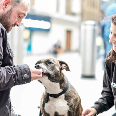Battersea and StreetVet: Partnering to help more pets in need