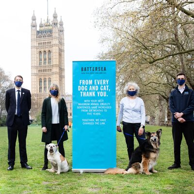 Justice at last for animals in England and Wales
