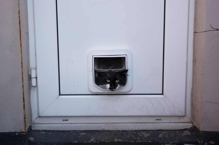 Introducing Your Cat To The Outside Battersea Dogs Cats Home