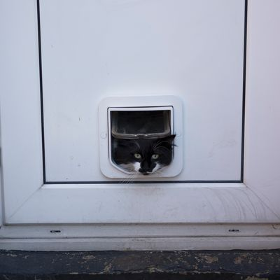 Cat flap advice
