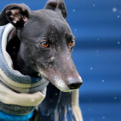 Winter dog care