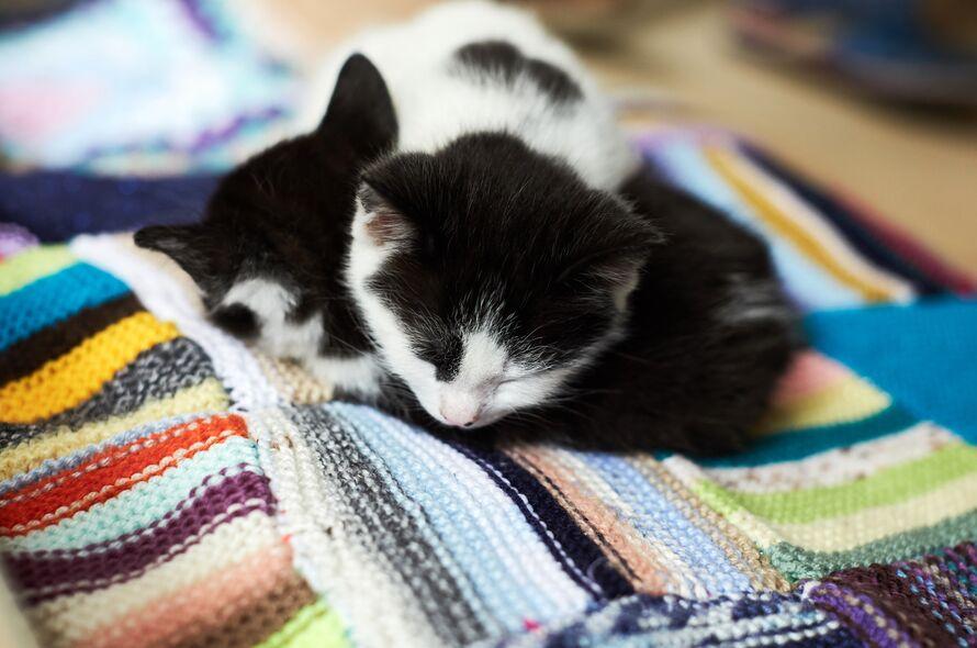 Kitten Season Battersea Dogs Cats Home