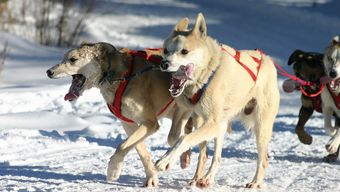 The Lapland Husky Trail Challenge