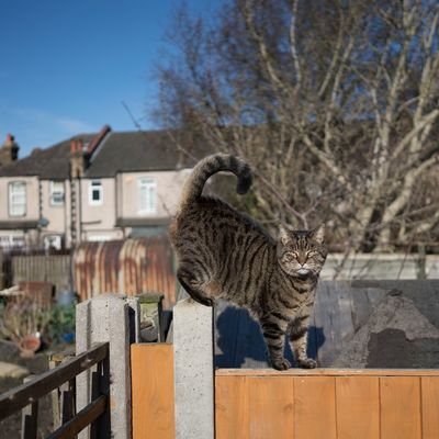 Creating a cat-friendly garden