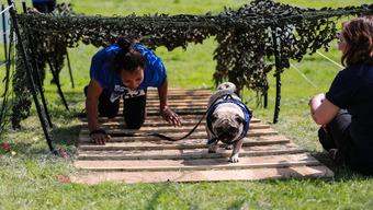 Muddy Dog Challenge 2016