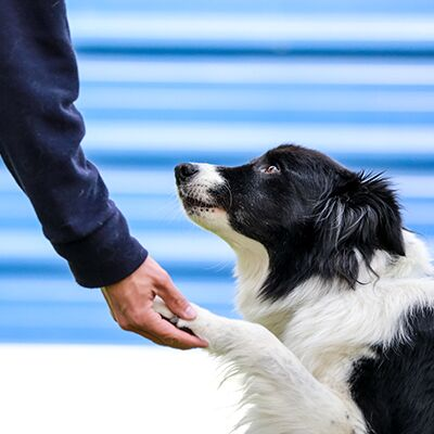 How to teach your dog a high five