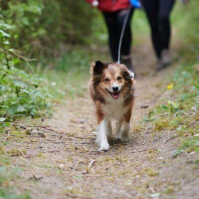 Muddy Dog Trek