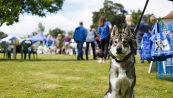 Battersea Dogs & Cats Home Trade Stand Events