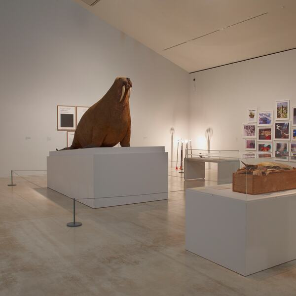 Installation View of Curiosity: Art and the Pleasures of Knowing Exhibition