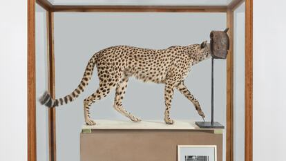 The artwork Measure and Control Cheetah from the exhibition Kader Attia: The Museum of Emotion at Hayward Gallery. Copyright the artist, courtesy Hayward Gallery 2019.