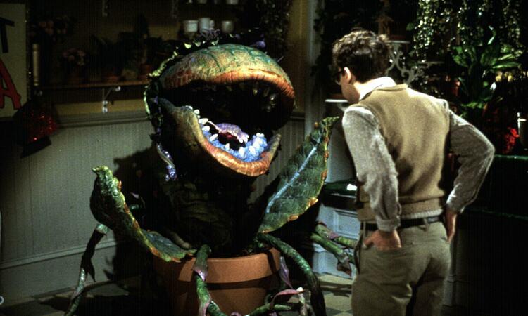 Film still from Little Shop of Horrors (1986)